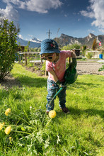 Young Cute Toddler Girl Helps In The Vegetable Garden By Watering Plants
