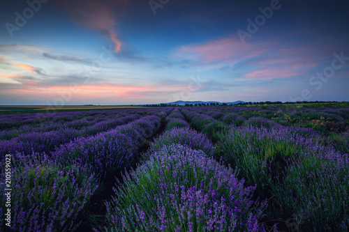 Photo  Lavender field at unset