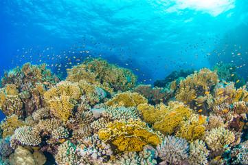 Naklejka na ściany i meble Coral Reef 2