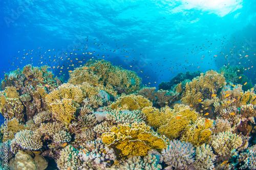 Staande foto Koraalriffen Coral Reef 2