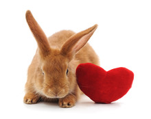 Rabbit With Toy Heart.