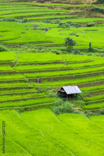 In de dag Lime groen Green of rice terrace located on hill of mountain view located at Vietnam