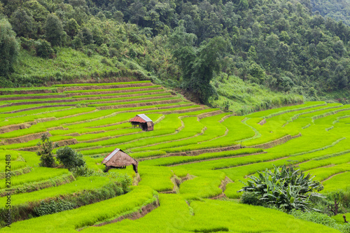 Green of rice terrace located on hill of mountain view located at Vietnam