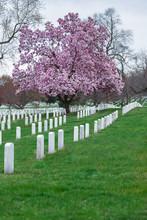 Arlington National Cemetery Wi...