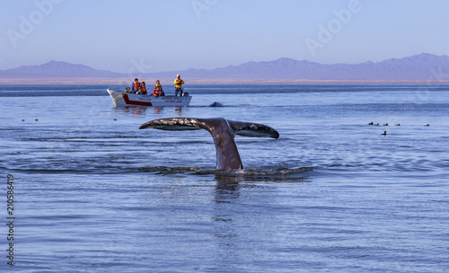 Whale watching in Ojo De Liebre Lagoon, Baja California Norte, Mexico