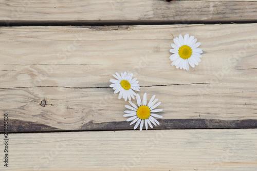Fototapeta Kwiaty rumianku na drewnianych deskach obraz