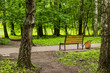 summer green nature outdoor park concrete empty road with wooden bench