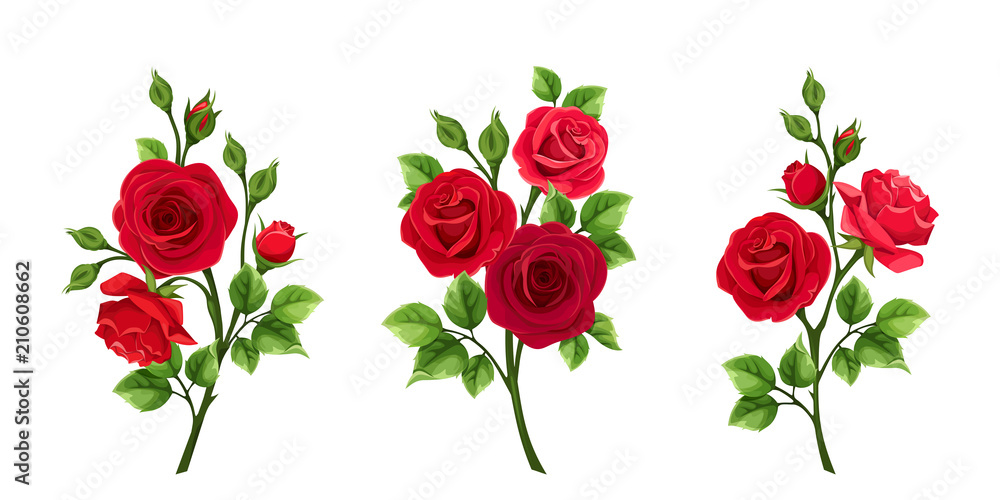Fototapety, obrazy: Vector set of branches of red roses isolated on a white background.