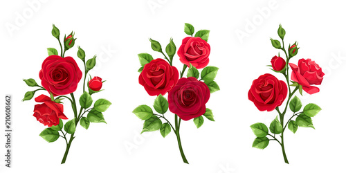 Photo  Vector set of branches of red roses isolated on a white background