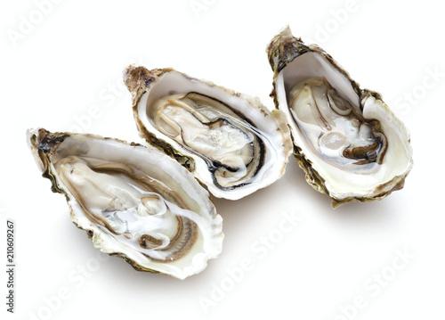 set of oysters isolated on white background Slika na platnu