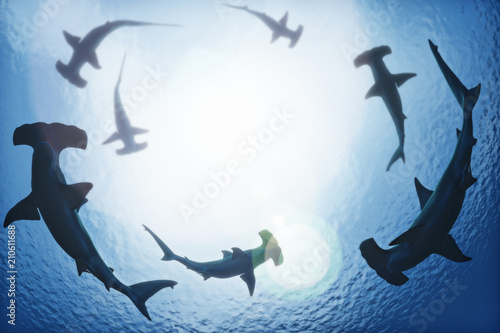 Photo School of hammerhead sharks circling from above the ocean depths