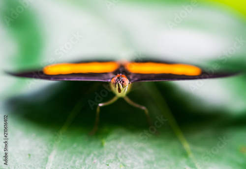 Foto op Aluminium Macrofotografie Close up macro photography of a colorful butterfly sitting on a green leaf