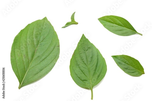 Keuken foto achterwand Paardebloem Top view of leaves sweet Basil or Thai Basil isolated on white background. (horapa,Ocimum basilicum Linn.,Lamiaceae)