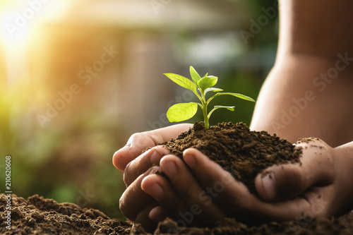 Poster Vegetal hand holding plant growing and sunset. concept eco and green world