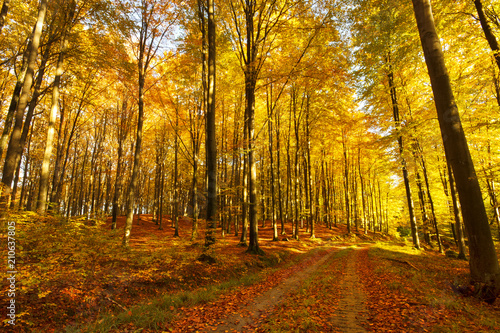 Tuinposter Herfst Road in a colorful, autumn forest.Pomerania ,Poland