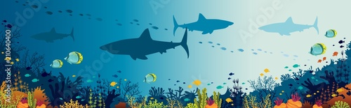 Fototapeta Sharks, coral reef, underwater sea and fishes.