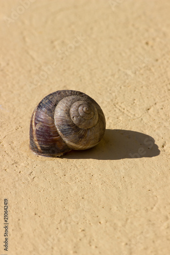 Photo A snail agglutinated on a yellow wall and its shadow