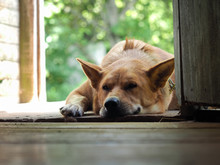 The Dog Is Big, Red's Asleep O...