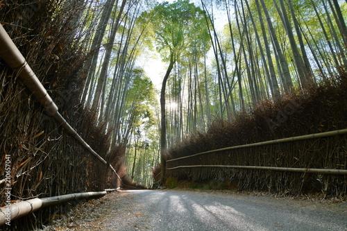Foto op Plexiglas Bamboe Sagano bamboo forest. Arashiyama. Kyoto. Japan