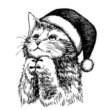 Kitten Cat With Christmas Hat