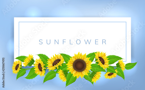 Obraz na plátně Horizontal banner frame with yellow sunflower and green leaf