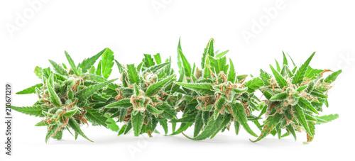 Photo  Fresh Medical marijuana isolated on white background