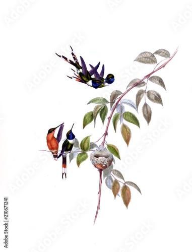 In de dag Art Studio Illustration of a Hummingbird.