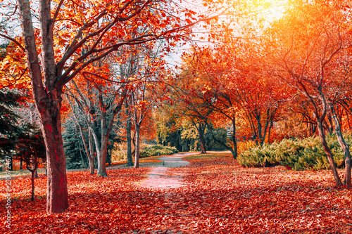 Autumn nature landscape. Walkway in colorful forest in fall.