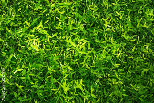 Beautiful bamboo grass background texture