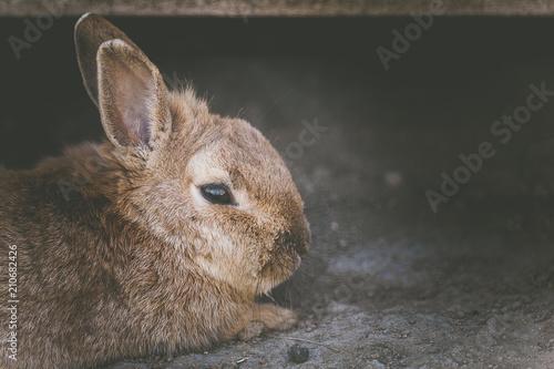 Foto  Petit lapin brun
