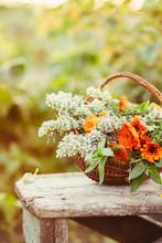 Flowers In A Basket In The Garden