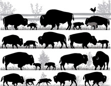 Silhouettes Of American Bison, Or Buffalo, Outdoors