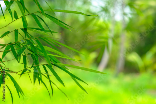 bamboo leaves with a green nature backgrounds