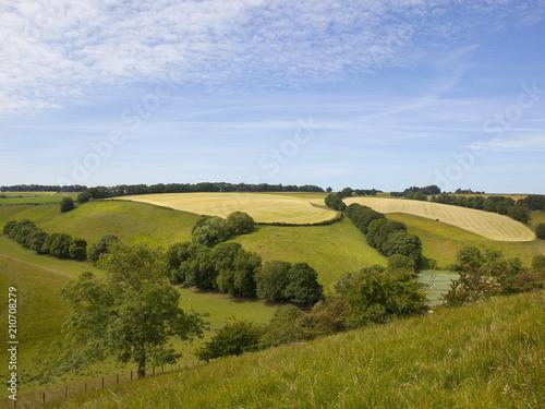 Foto op Aluminium Blauwe hemel Yorkshire grazing meadows