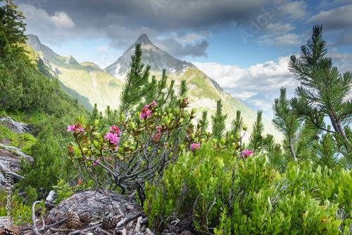 Fotografie, Tablou Alpenrosen mit Berggipfel im Hintergrund