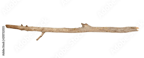 Fotografia Tree stick isolated on white background