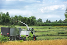 Harvesting Grass With A Forager And Trailer