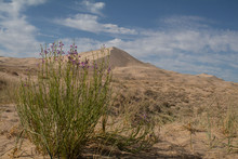 Kelso Sand Dunes Desrt Landscape