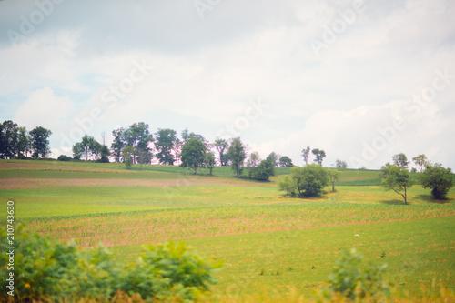 Tuinposter Wit grass of field, Rural landscape.