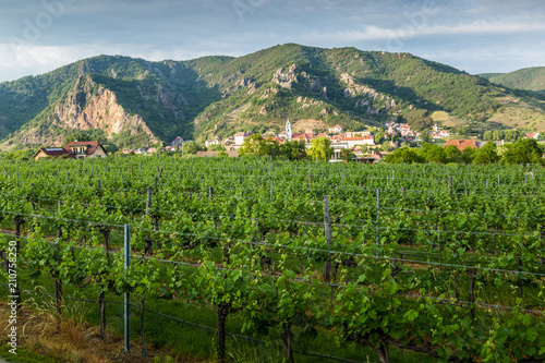Foto op Aluminium Guilin View of Durnstein through vineyards in summer evening. Lower Austria.
