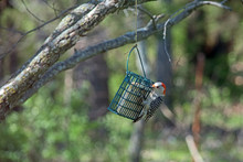 A Red Bellied Woodpecker Enjoy...