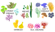 Set Of Different Species Of Corals, Sea Anemones, Sponges, Marine Algae On White Background