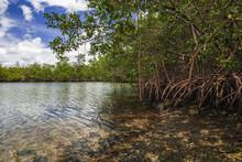 Miami Mangrove Swamp