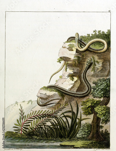 Photo Stands Bonsai Illustration of a snake.