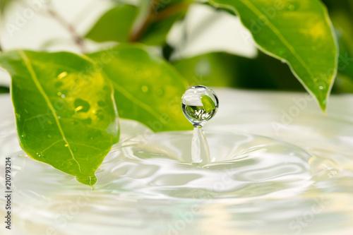 Fototapeta 葉と水面   obraz