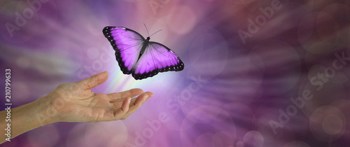 Fotografie, Obraz Spirit Release depicted by a magenta Butterfly taking flight - female hand with