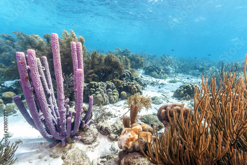 Poster Sous-marin Caribbean coral reef