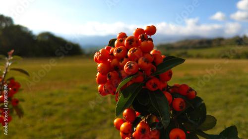 Baie Arbuste Haie Cloture Jardin Paysage - Buy this stock ...
