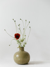 A Single Red Poppy Is Blooming In A Round Ceramic Vase In A Minimal White Setting.