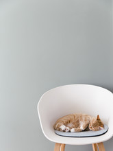 A Ginger Cat Sleeping In A White Designer Chair On A Light Blue Felt Cushion In Front Of A Muted Green Wall.